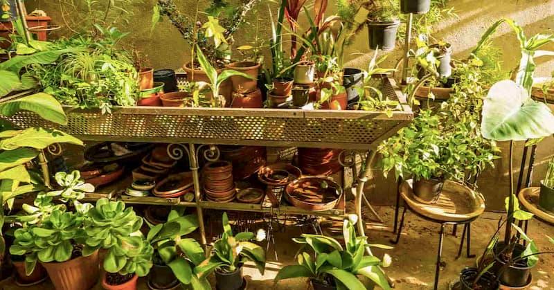 organic farming at home